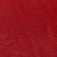 Aulne rouge